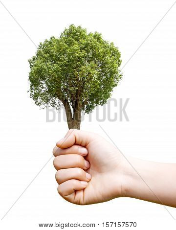 Holding a camphor tree environmental protection concepts.