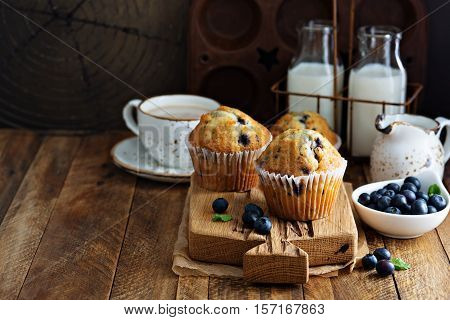 Freshly baked blueberry muffins in a rustic setting with milk and coffee on the table with copyspace