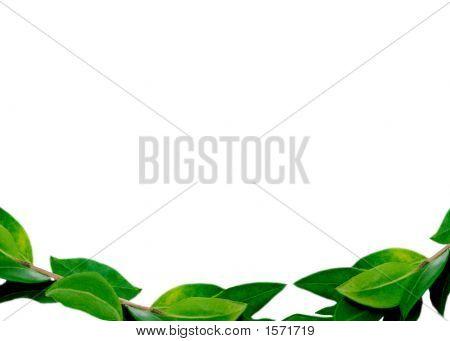 Leaves Border Bottom