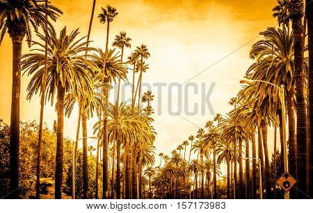 Palm trees in Los angeles in Beverly hills