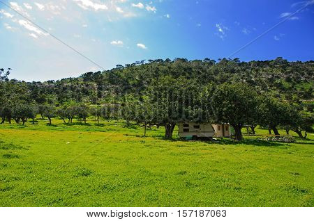 Carob meadow in the Akamas west of Cyprus