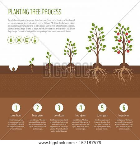 Planting tree process infographic. Apple tree growth stages. Steps of plant growth. Business concept. Flat design vector illustration.