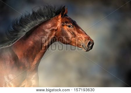 Bay stallion with long mane portrait in motion against dark background