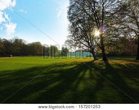 park with group of trees in twighlight with sunbeams