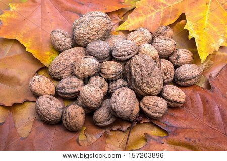 to discolor the leaves of trees are there walnuts