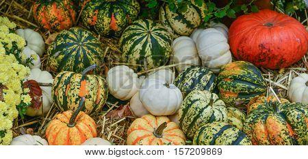 Diverse Assortment Of Pumpkins On Background. Autumn Harvest.