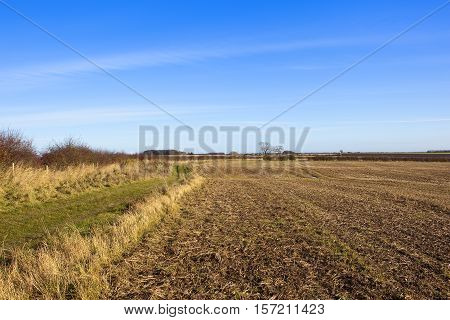 Footpath And Harvested Field