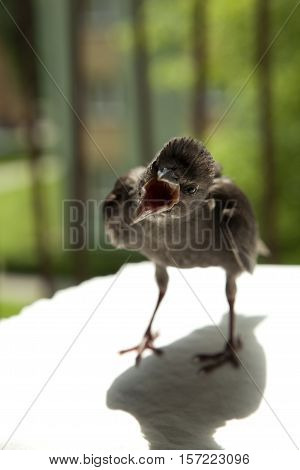 young starling stands on stool and warms oneself