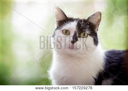 Black-and-white cat sits at a window in sunshine on green background