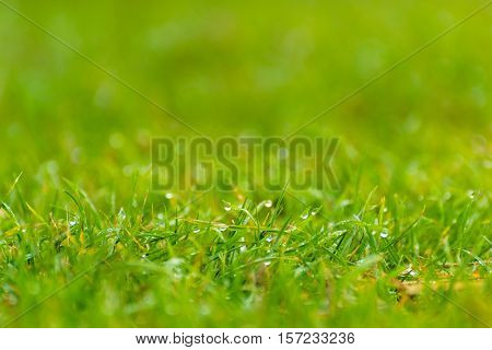 Grass with Drops of Water, Dewy Short Grass
