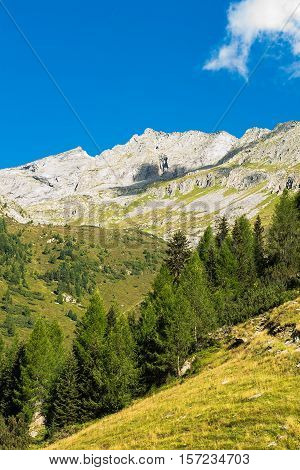 High Mountains with Blue Sky. Alpen Mountains and Pine Trees.