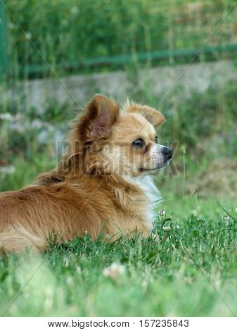 Dog chilling in a beaufitull green grass