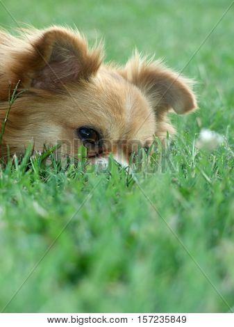 Dog chilling in a beautifull green grass
