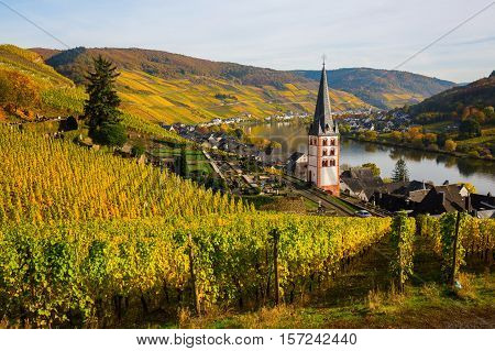 Vineyards At Merl, Germany, In Autumn