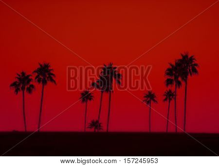 Art photo of Palm trees in silhouette against red sky