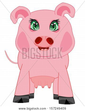 Animal sow on white background is insulated