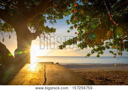 Tropical beach background at sunrise with tree in thailand
