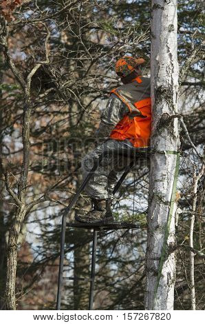 A young deer hunter in Minnesota in a tree stand