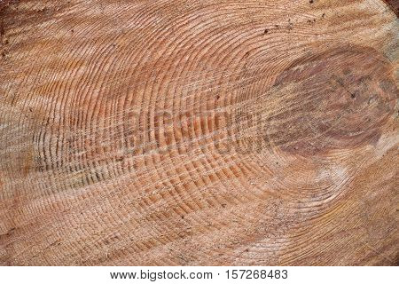 Cut of old trunk . The core of tree consist of growth rings and deep cracks. Background.
