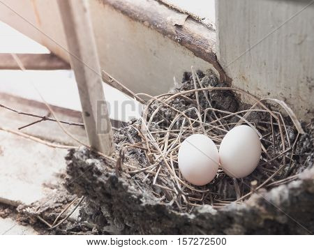 Bird's eggs in the straw nest, Built on the roof. Selective focus with place your text