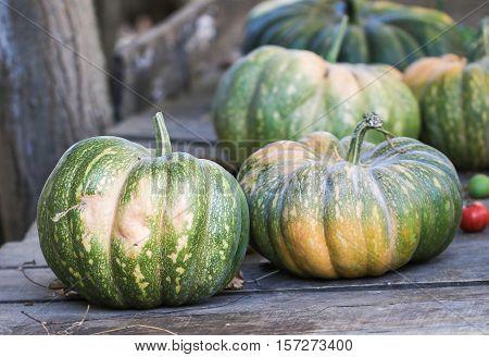 Diverse assortment of pumpkins on a wooden background. Autumn harvest.