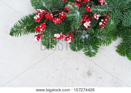 red and white christmas - twig with red berries and gree evergreen tree with copy space