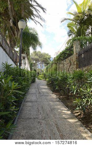 Narrow pathway among plants in Marbella Spain