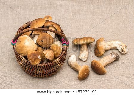 Group of porcini mushrooms on linen. The natural color and texture. Mushroom in the basket.