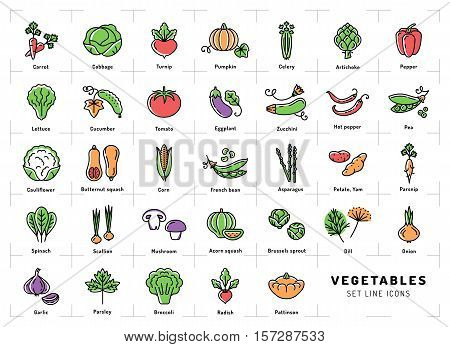 Vegetables icon isolated, Spices logo. Colorful icons of vegetables in the trendy linear style. Fresh vegetarian food: tomato, salad, carrot, pepper, pumpkin, pea, onion, dill, parsley and etc. Vector