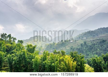 Scenic View Of Woods At Highlands Of Sapa District, Vietnam