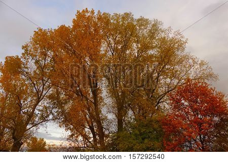 nice autumn with his different colors of the leaves
