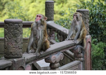 Monkeys in Zhang jia jie, Hunan, China
