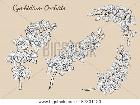 Cymbidium Orchids vector on brown background.Cymbidium Orchids set by hand drawing.