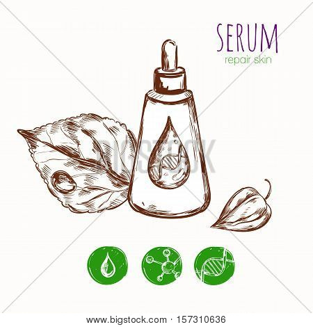 Serum cream skin repair concept with sketch images of package leaves detailed drop and molecule icons vector illustration