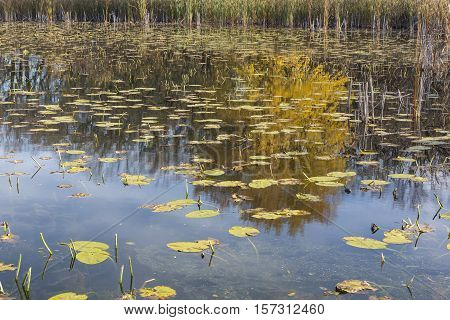 A swampy reflective lake during late autumn.