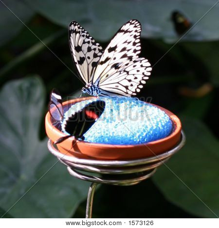 Close Up Image Of A Beautiful Butterfly
