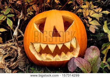 Illuminated spooky Halloween pumpkin lantern with teeth