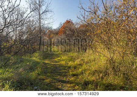 A hiking trail in the woods during autumn.