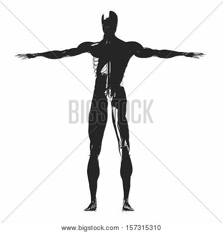 Human anatomy, health, sillhouette, outline. 3d illustration