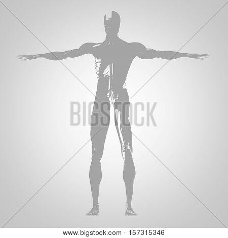 Human anatomy, health, sillhouette, outline. 3d illustration