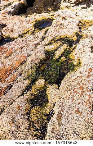 Close up of the rocky coral shore tide pools at Acadia National Park Maine
