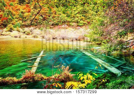 Azure Crystal Water Of Lake With Submerged Tree Trunks In Autumn