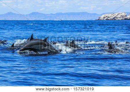 Dolphins jumping in Mexico. Isla Espiritu Santo near La Paz, in Baja California.
