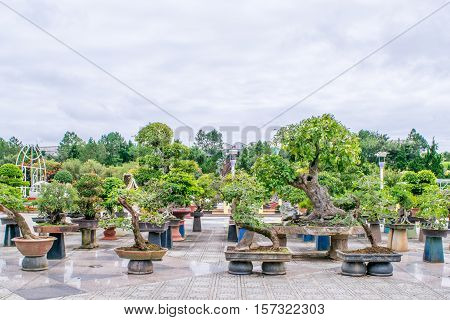 Many pots with Bonsai trees  in a park at Dalat Vietnam