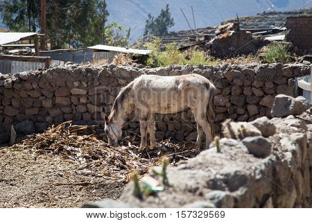 The village of Cabanaconde @ Colca Canyon, Peru