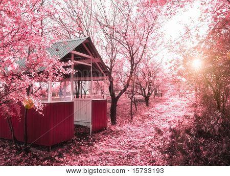 Pink spring(infrared photo)