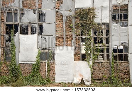 Wall of old abandoned building with the broken windows and wild vine