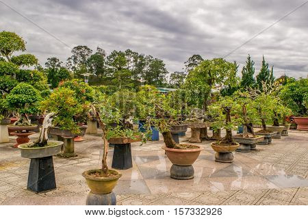 Many Bonsai trees on a stone in a park of flowers in Dalat, Vietnam