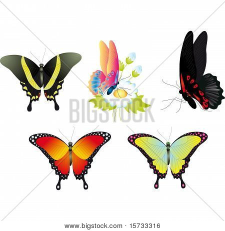Batterfly vector set