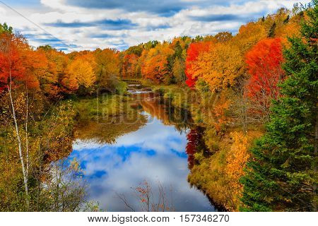 Red leaves in Autumn, New Brunswick, Canada